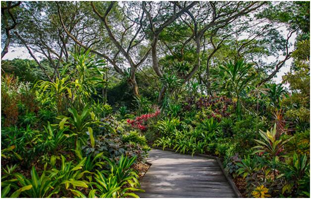 Foliage Garden